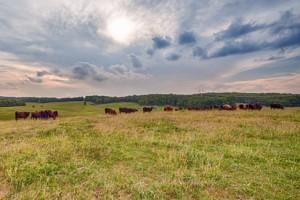 DeHaven Farms
